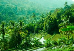 Munduk, Bali rice paddies