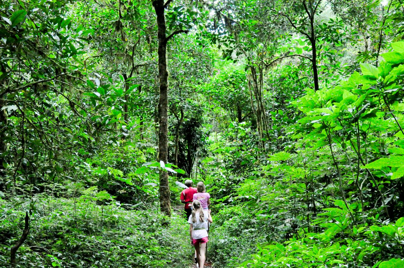 jungle trekking experience 2 days jungle trekking, the most popular for sumatran orangutan treks,this the easiest and fastes way to get real experience staying in the sumatran rainforest adventure, more 4 days tour elephant and .