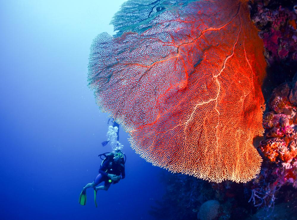 Plong e sous marine tulamben et l 39 le de menjangan - Prix plongee bali ...