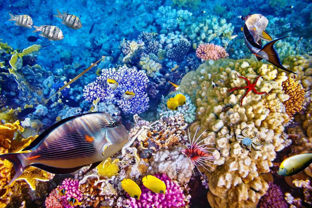 Image Result For Bom Bali